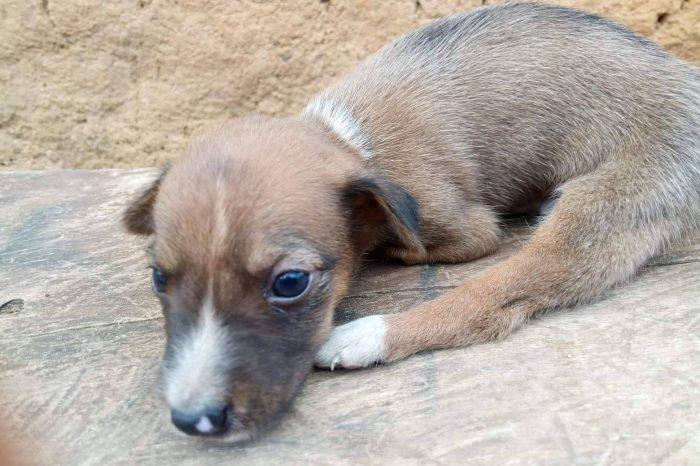This Little Puppy Needs Help